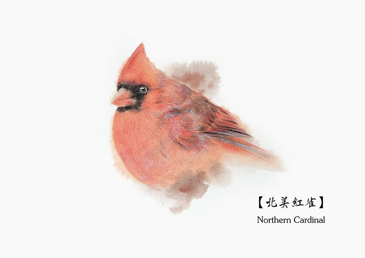 Scientific-The Prototype of the Angry Bird-刘鑫.png